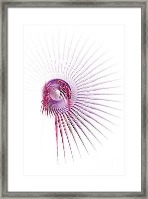 Dreamcatcher Framed Print by Ann Garrett