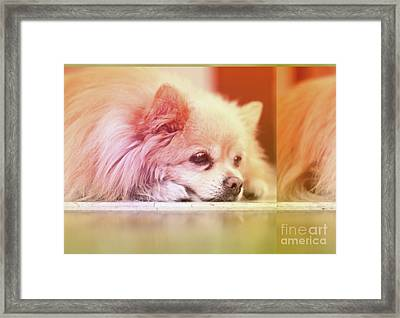 Dreaming Framed Print by Charline Xia