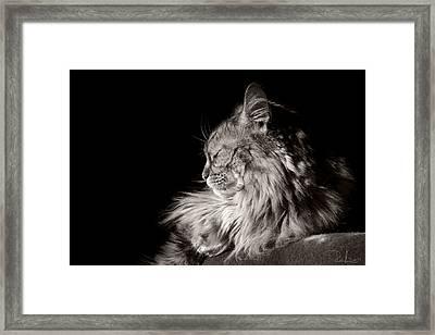 Dreaming Framed Print by Raffaella Lunelli