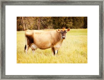 Dreamy Jersey Cow Framed Print by Michelle Wrighton
