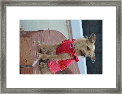 Dress Up Framed Print by Stacy Brock