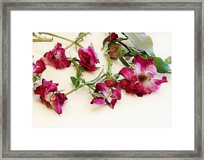 Dried Beauty Roses Framed Print by Marsha Heiken