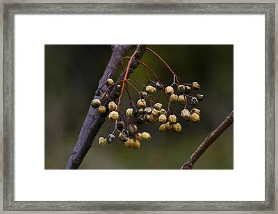 Dried Fruits Framed Print by Tal Richter
