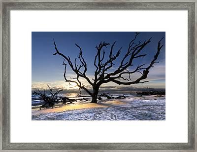 Driftwood Beach At Dawn Framed Print by Debra and Dave Vanderlaan