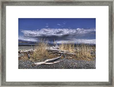 Driftwood By The Sea Framed Print by Michele Cornelius