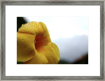 Droplets Framed Print by Frederico Borges