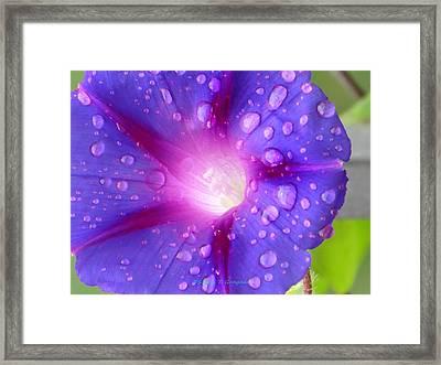 Droplets Glory Framed Print by Sonali Gangane