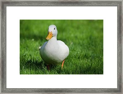 Duck On Grass Framed Print by Mats Silvan