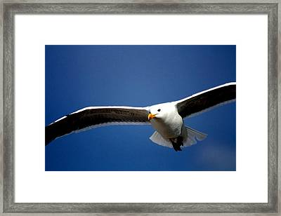 Duck Framed Print by Patrick Anderson