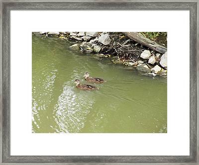 Duckling Pair Framed Print by Corinne Elizabeth Cowherd