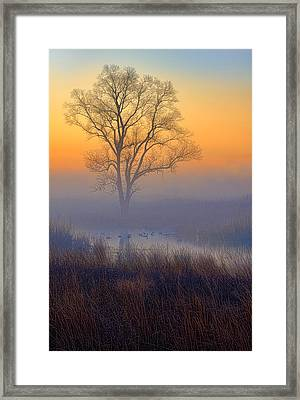 Ducks At Sunrise Framed Print by Jay Sheinfield