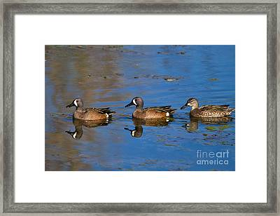 Ducks In A Row Framed Print by Louise Heusinkveld