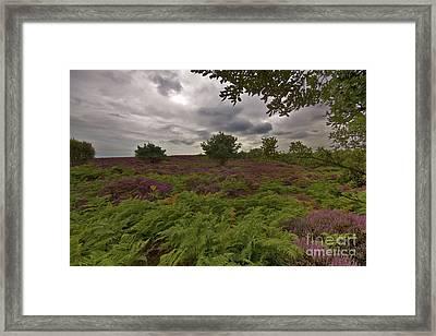 Dunwich Heath Framed Print by Darren Burroughs
