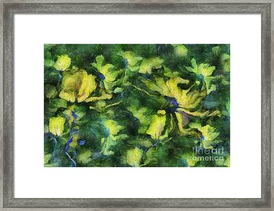 Duo Daisies - Bk01bdp01a Framed Print by Variance Collections