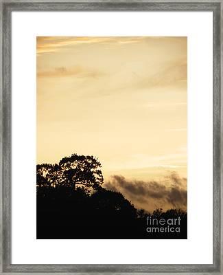 Dusk Forest  Framed Print by Pixel Chimp