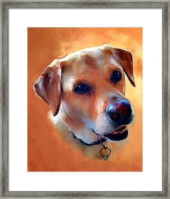 Dusty Labrador Dog Framed Print by Robert Smith