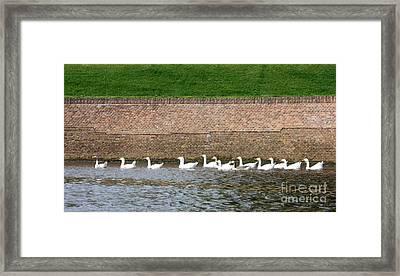 Dutch Geese Flotilla Framed Print by Carol Groenen