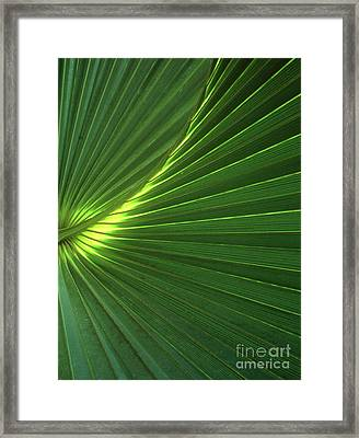 Dwarf Palmetto Leaves Framed Print by Vaughan Fleming