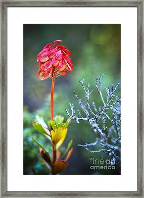 Dying Rocket Framed Print by David Lade