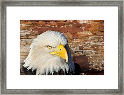 Eagle On Brick Framed Print by Marty Koch