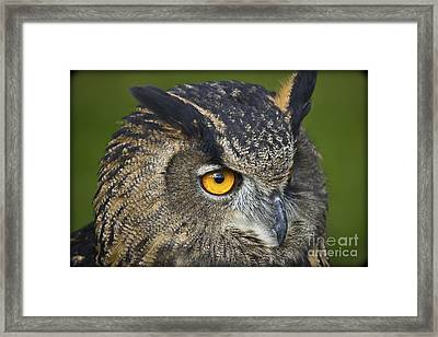 Eagle Owl 2 Framed Print by Clare Bambers