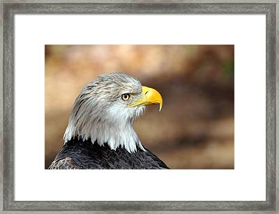 Eagle Right Framed Print by Marty Koch