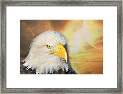 Eagle Sun Framed Print by Marty Koch
