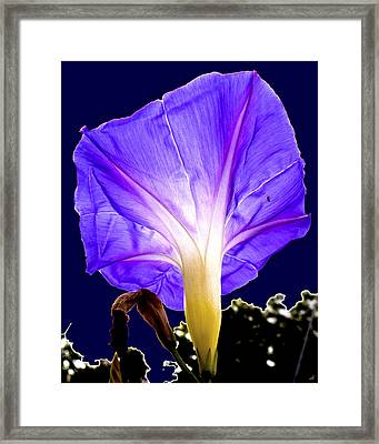 Early Morning Glory Framed Print by Roy Foos
