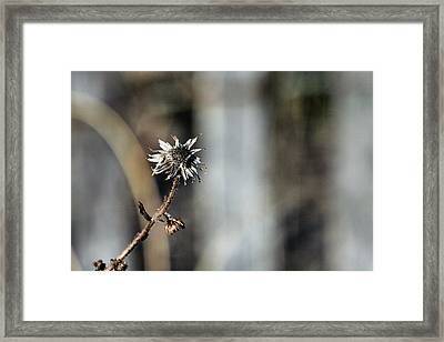 Earth Tones Framed Print by JC Findley