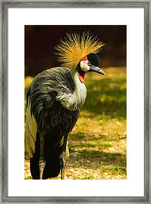East African Crowned Crane Pose Framed Print by Bill Tiepelman