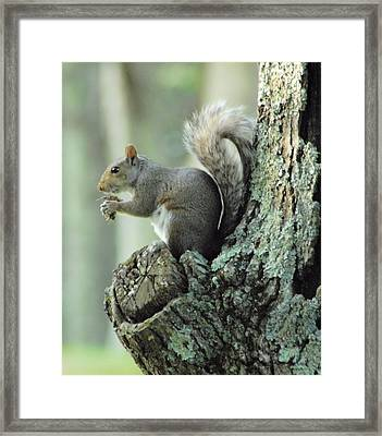 Eating Safely Framed Print by