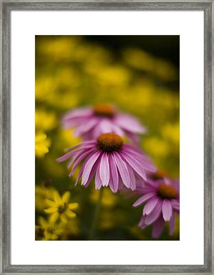 Echinacea Dreamy Framed Print by Mike Reid
