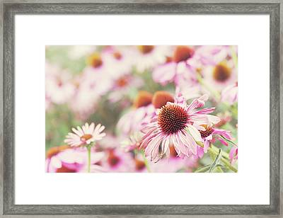 Echinacea In Sunlight, Close Up Framed Print by Leentje photography by Helaine Weide
