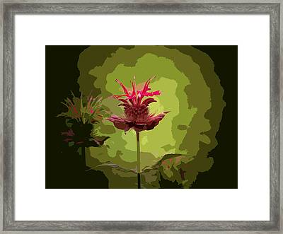 Editing With One Eye Open Framed Print by Trish Tritz