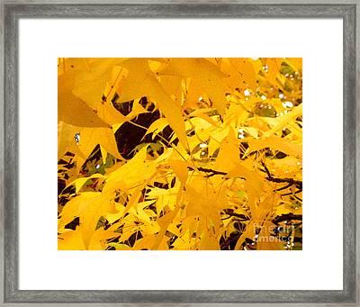 Efx.14 Framed Print by Shasta Eone