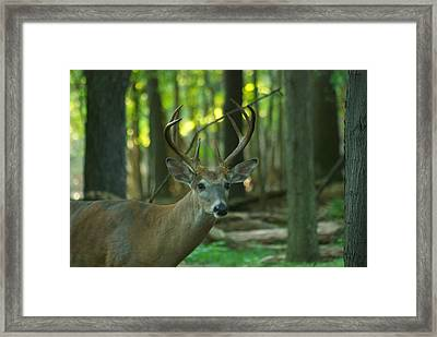 Eight Point_9531_4366 Framed Print by Michael Peychich