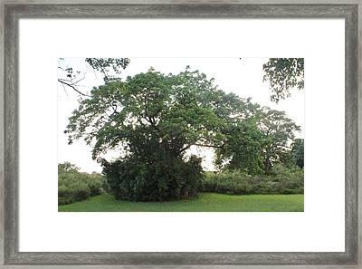 El Arbol Escondido Framed Print by Lorenzo Muriedas