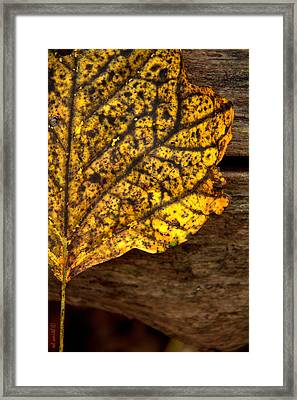 Elbowed Framed Print by Ed Smith