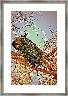 Elegance Framed Print by Diane montana Jansson