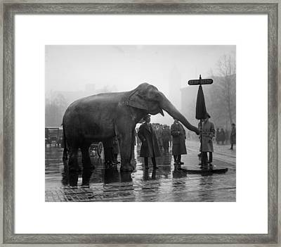 Elephant, And Stop Sign On A Wet Day Framed Print by Everett