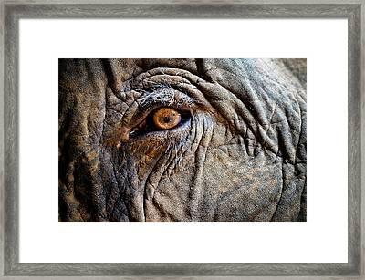 Elephant Eye Framed Print by Photo by Volanthevist