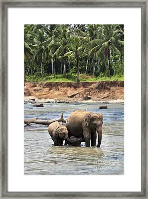 Elephant Family Framed Print by Jane Rix