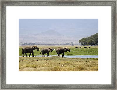 Elephants At The Watering Hole Framed Print by Marion McCristall