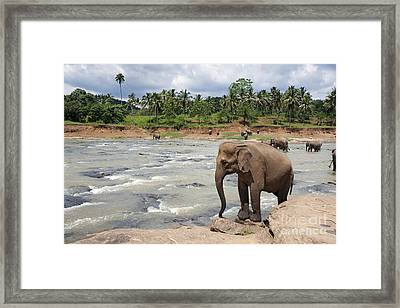 Elephants Framed Print by Jane Rix