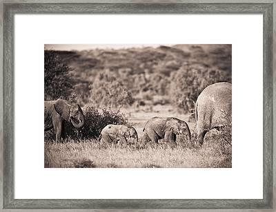 Elephants Walking In A Row Samburu Kenya Framed Print by David DuChemin