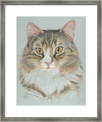 Eli Framed Print by Stephanie L Carr