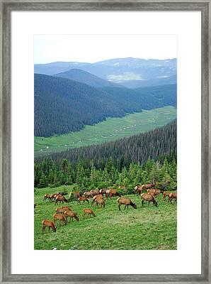 Elk Highlands Framed Print by Robert Meyers-Lussier
