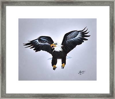 Elliott The Eagle Framed Print by Adele Moscaritolo