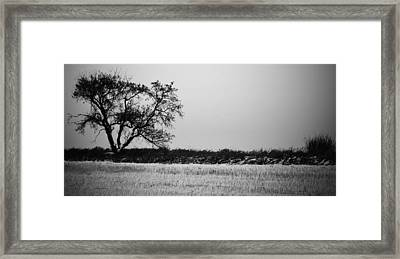 Elm And The Leaf Framed Print by JC Photography and Art