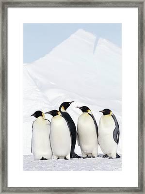 Emperor Penguins And Icebergs, Weddell Sea Framed Print by Joseph Van Os